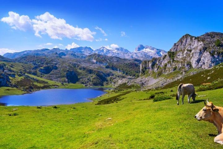 Experiencia de ecoturismo en el Parque Nacional de Los Picos de Europa. Viajes por Asturias.