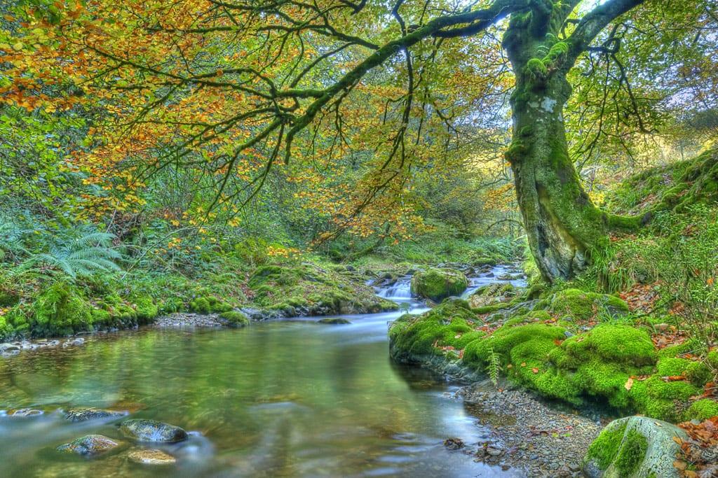 Paisaje con rio y hayedo en el paisaje en el Bosque de Muniellos