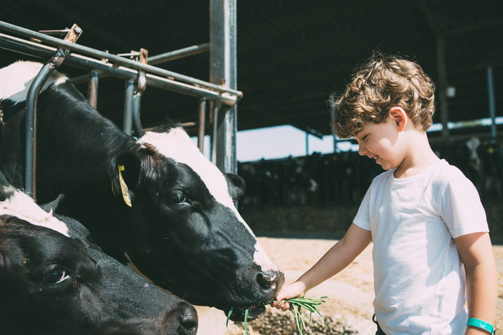 Visita a una granja con animales y huerto para que los más pequeños de la casa se familiaricen con el mundo rural