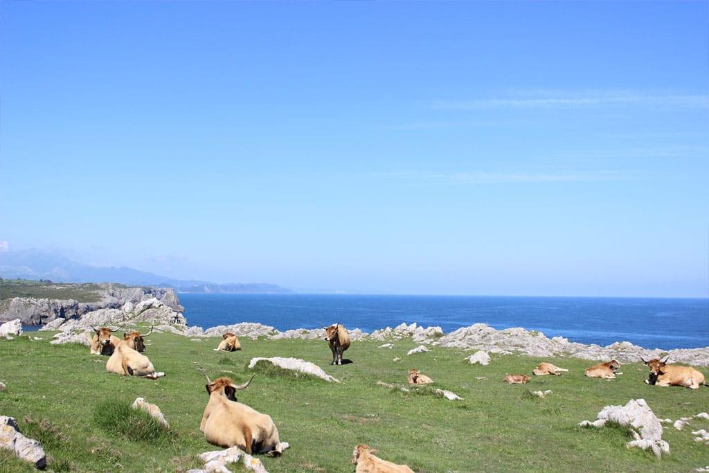 Camino del indiano, costa asturiana y paisajes rurales