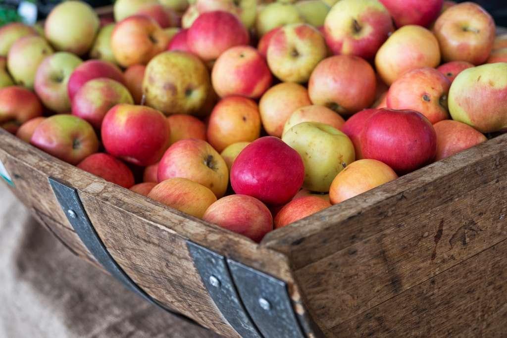Manzana recogida para elaborar sidra