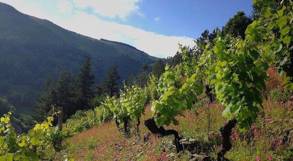 Vino en Asturias, viticultura heroica