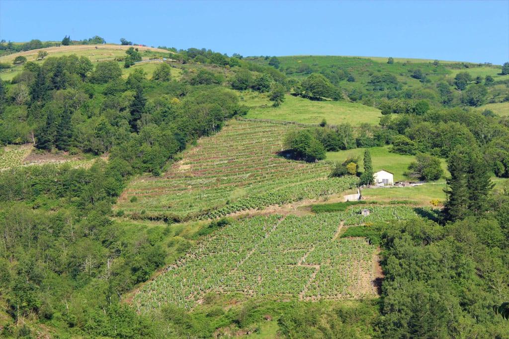 Entorno rural en el que se cultiva la uva del vino de Cangas