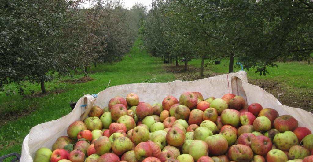 Cómo se hace la sidra en Asturias