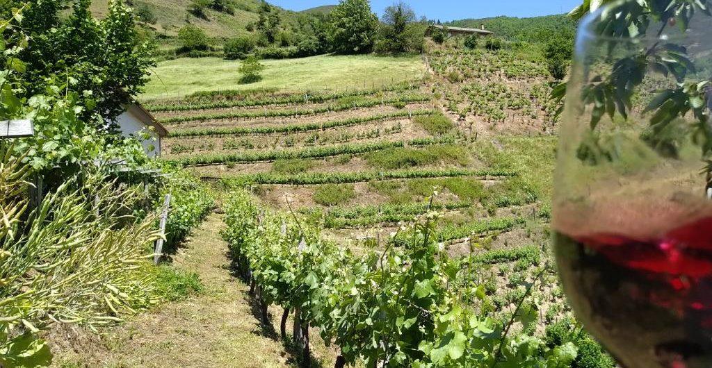 vino asturias viticulturaheroica enoturismo