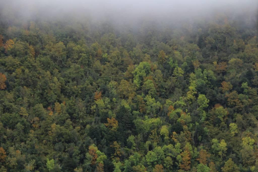 Paisaje de los diferentes árboles que crecen en Muniellos