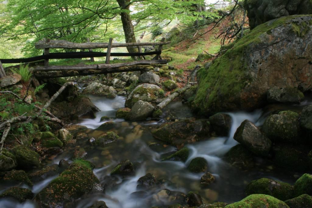 Camino y puente de madera en el Parque Natural de Redes en Asturias.